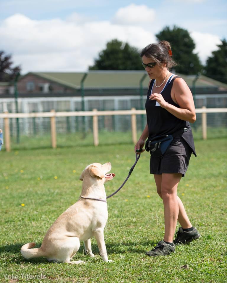 Hand feeding dog training